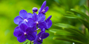 Plano detalle de flor color violeta