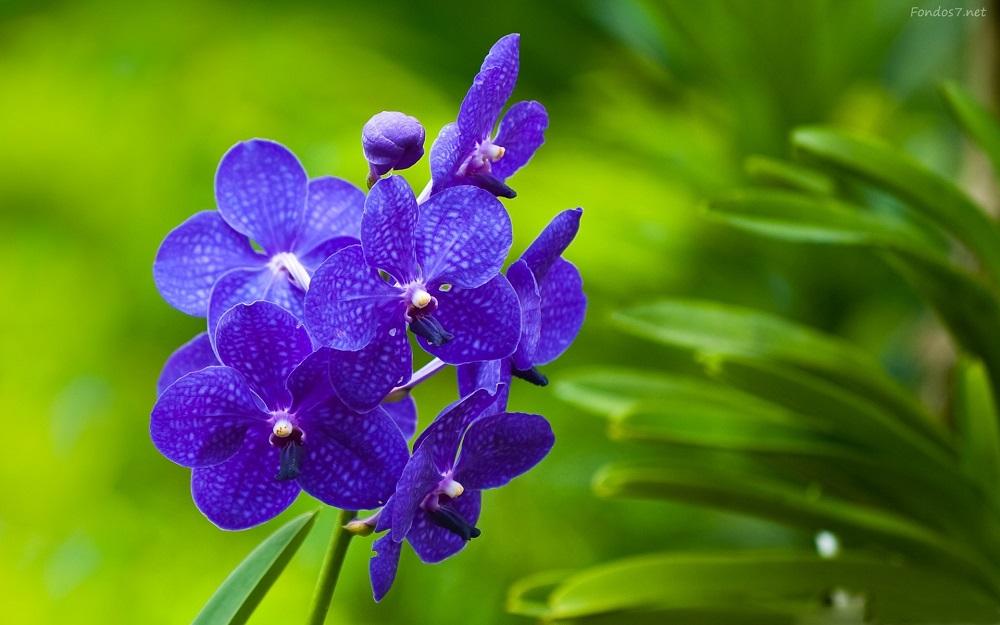 ¿Son las Flores de Bach un remedio sanador o una estafa?