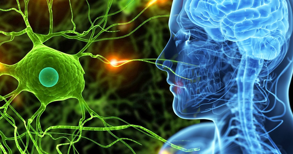Cuando las emociones alteran el sistema nervioso y enferman nuestro cuerpo