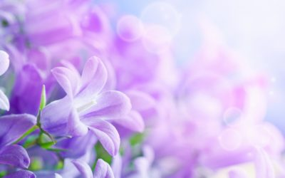 Algunas razones prácticas para utilizar la Terapia Floral de Bach