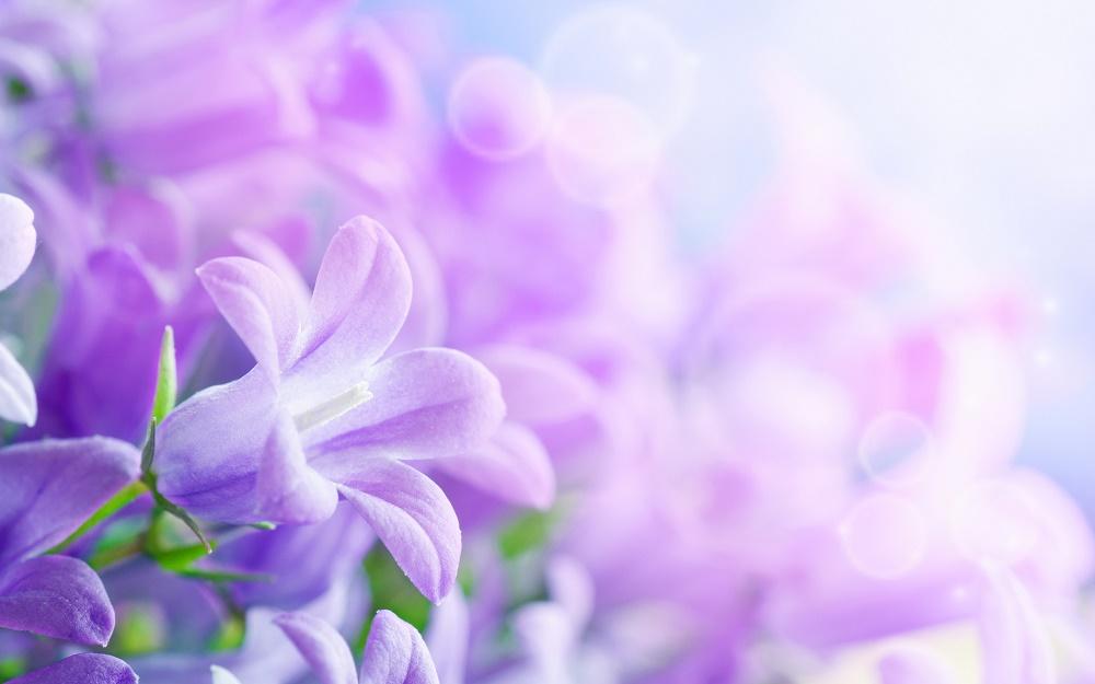 ¿Por qué utilizar las Flores de Bach? 11 Razones prácticas para hacerlo