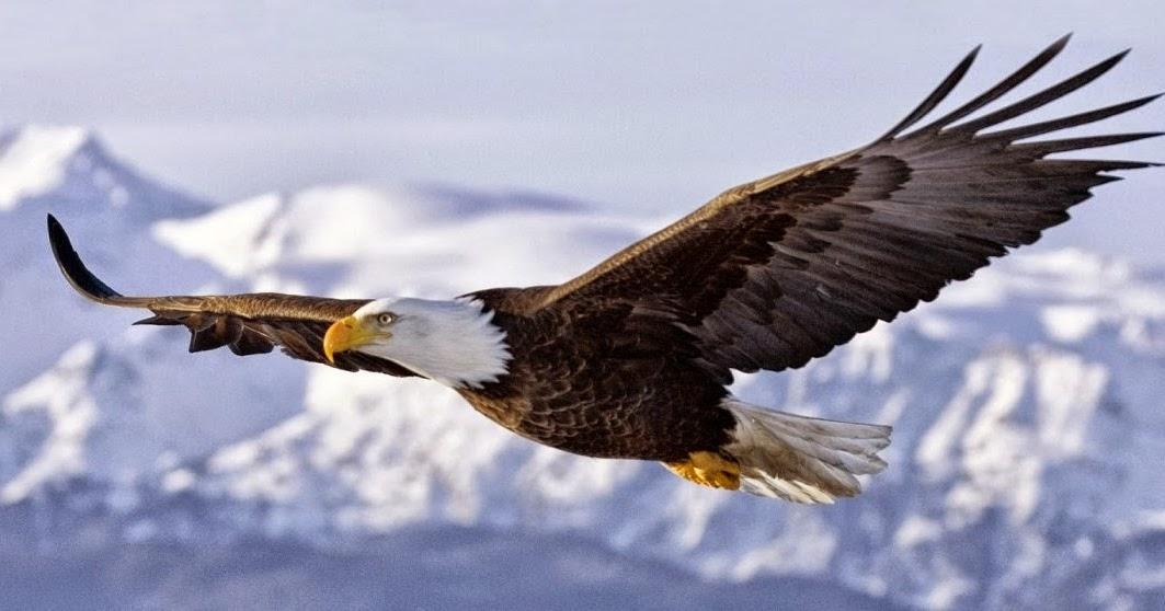 El águila desagradecida